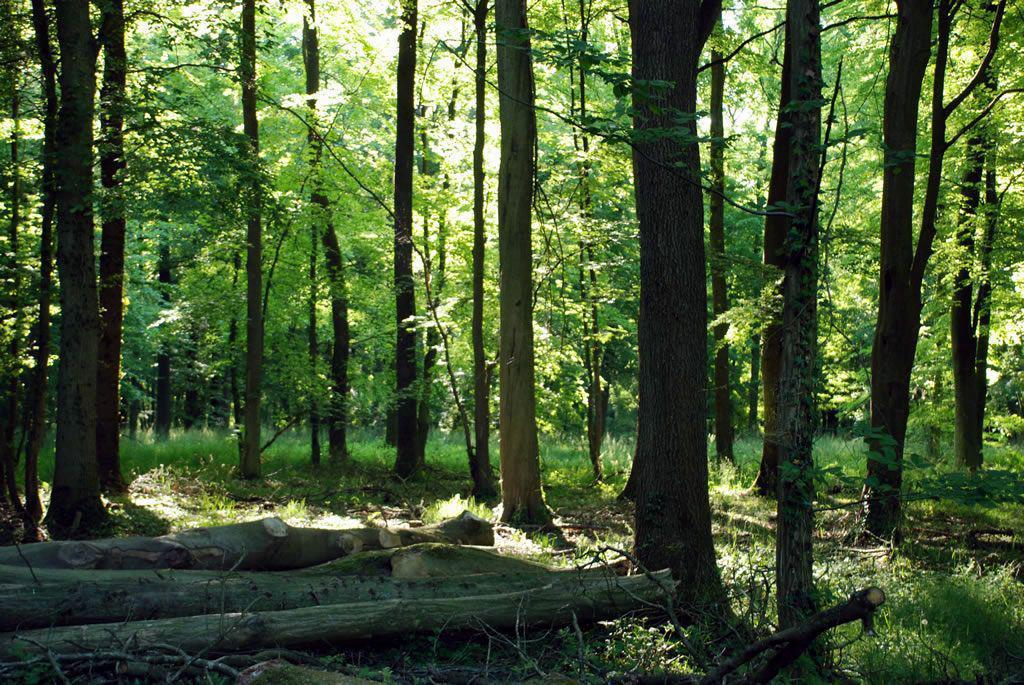 Forêt de Mormal_Le Quesnoy