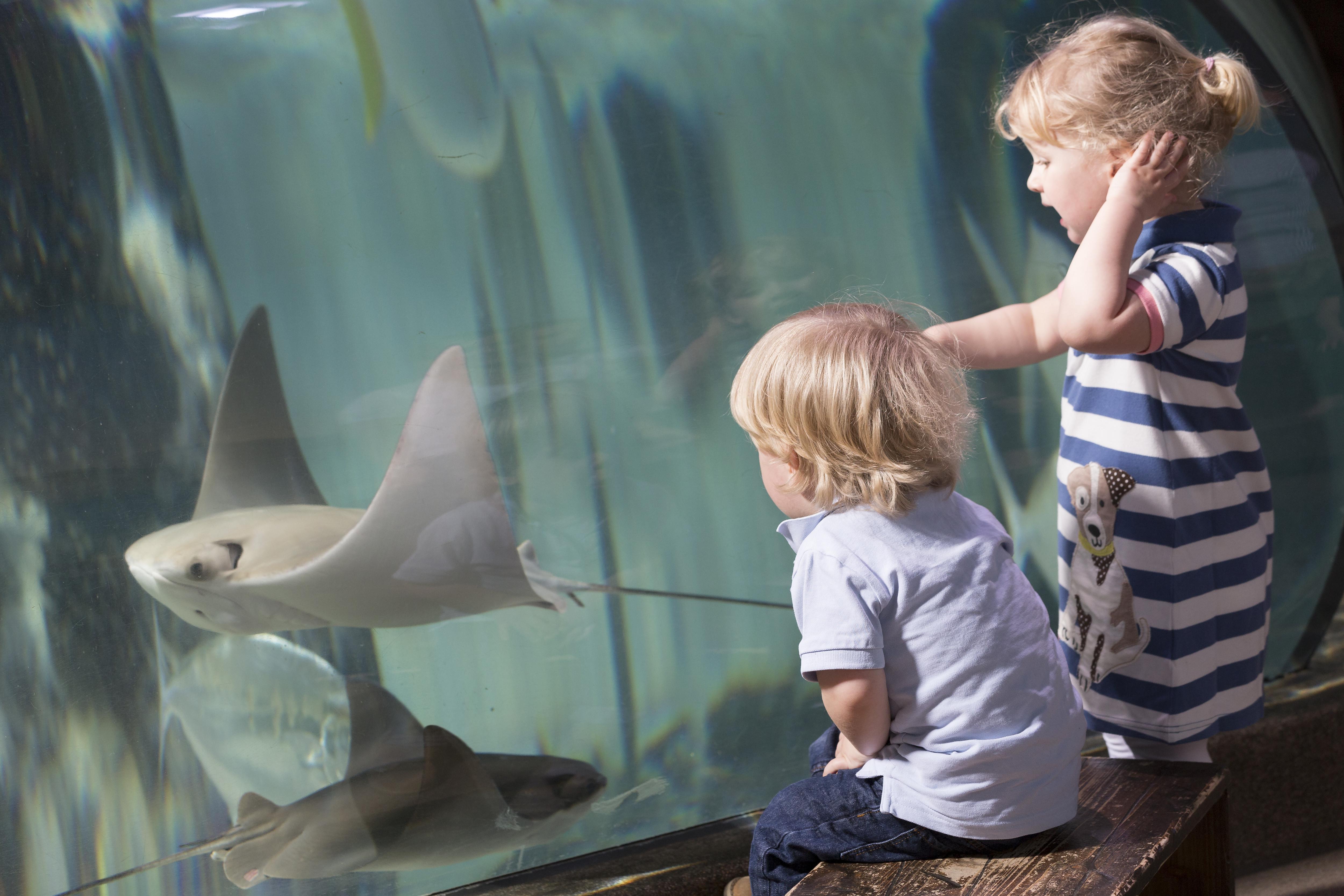 Sea Life Aquarium Serris