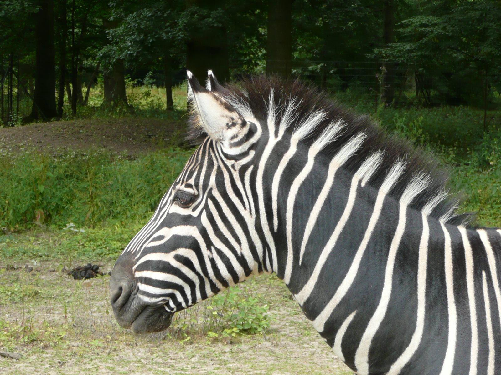 Parc zoologique du bois d'Attilly