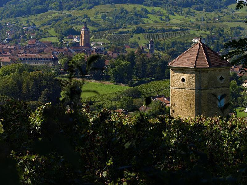La tour de Curon et les vignes du vin_Arbois