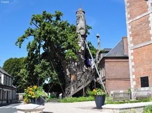 Le Chêne à Allouville-Bellefosse