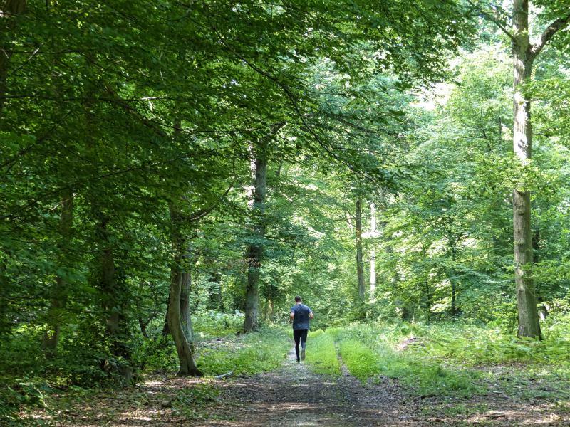 Forêt de Roumare Métropole
