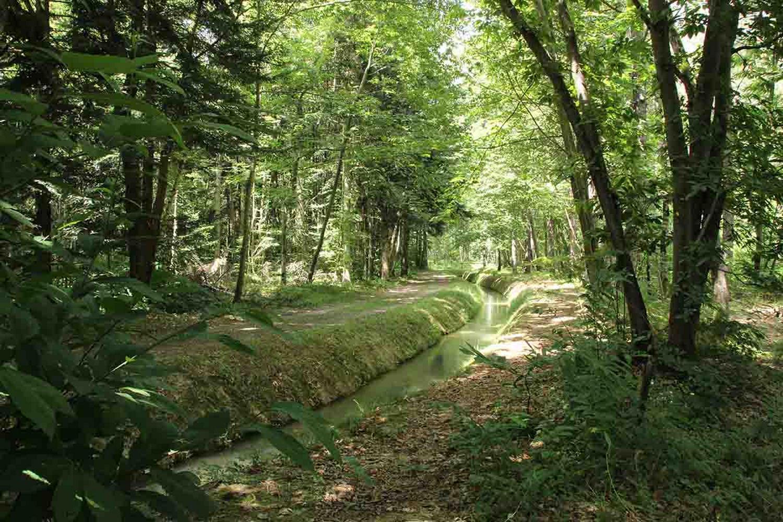 Arboretum 5 CARDEILHAC