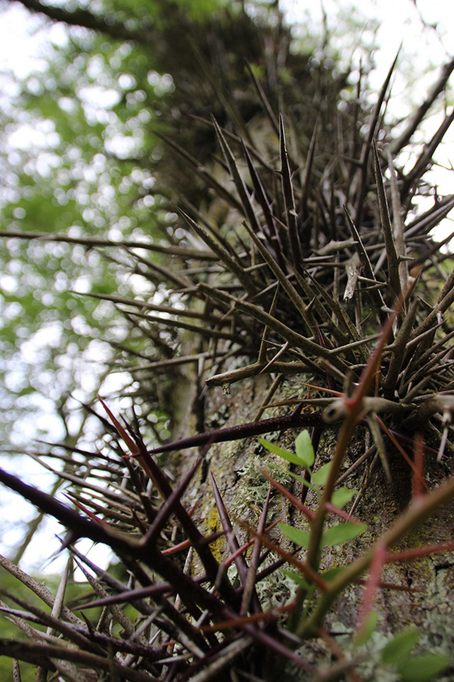 Arboretum 2 CARDEILHAC