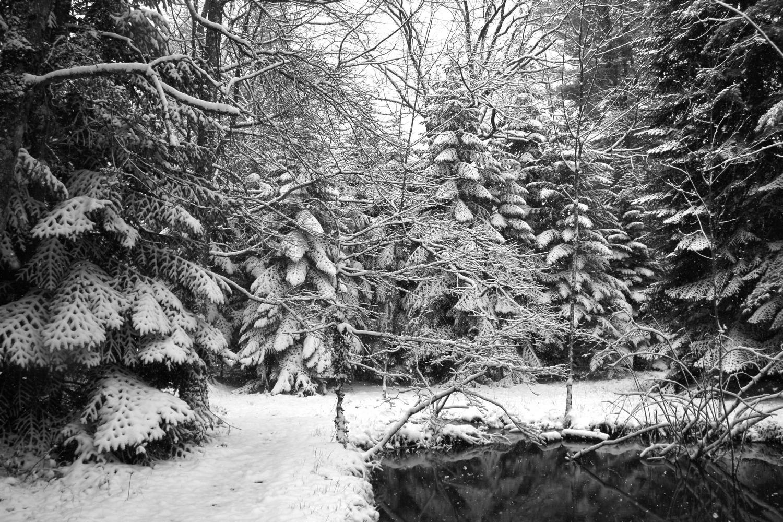 Arboretum CARDEILHAC
