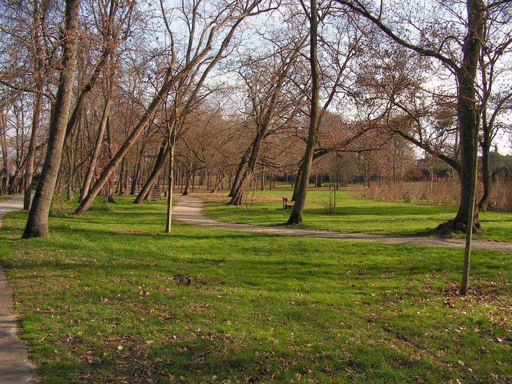Image : Bois De Limayrac