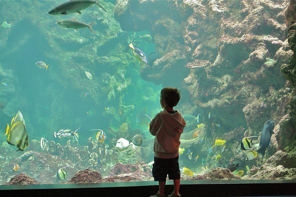 Image : Oceanopolis