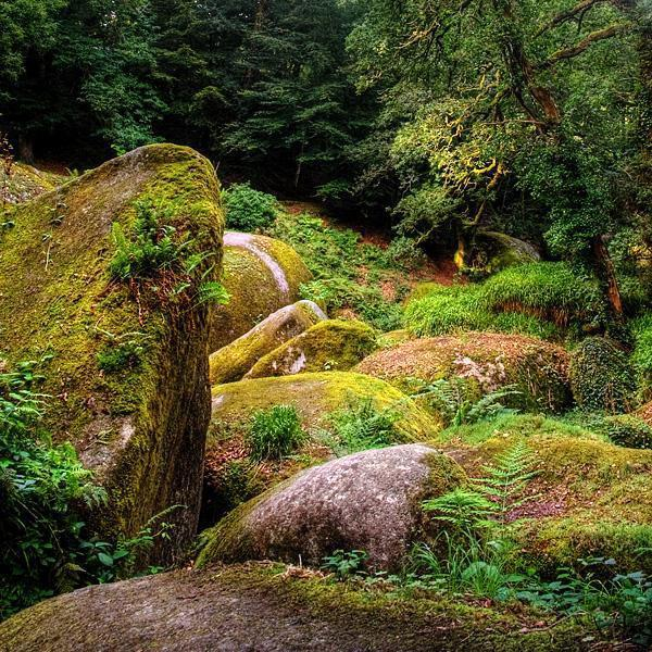 Forêt_Huelgoat
