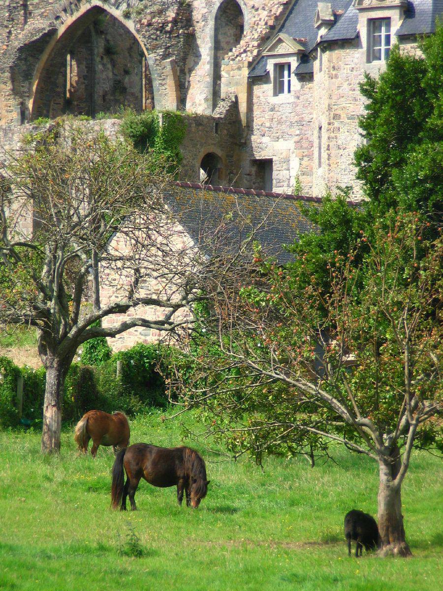 Abbaye de Beauport_Paimpol (1)