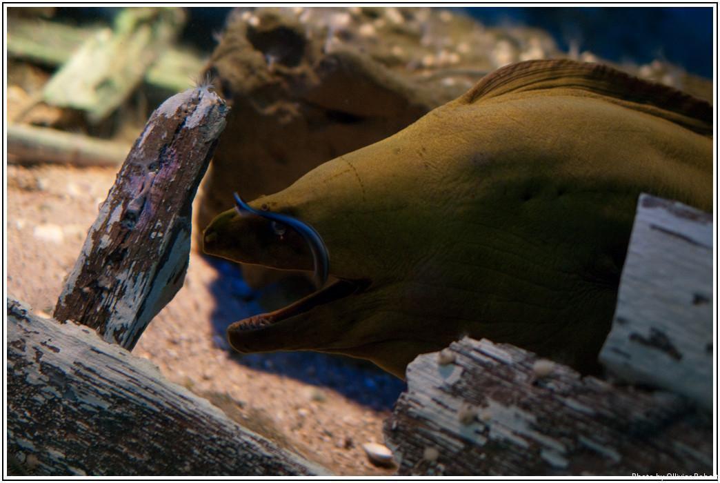 Aquarium du Golfe_Vannes