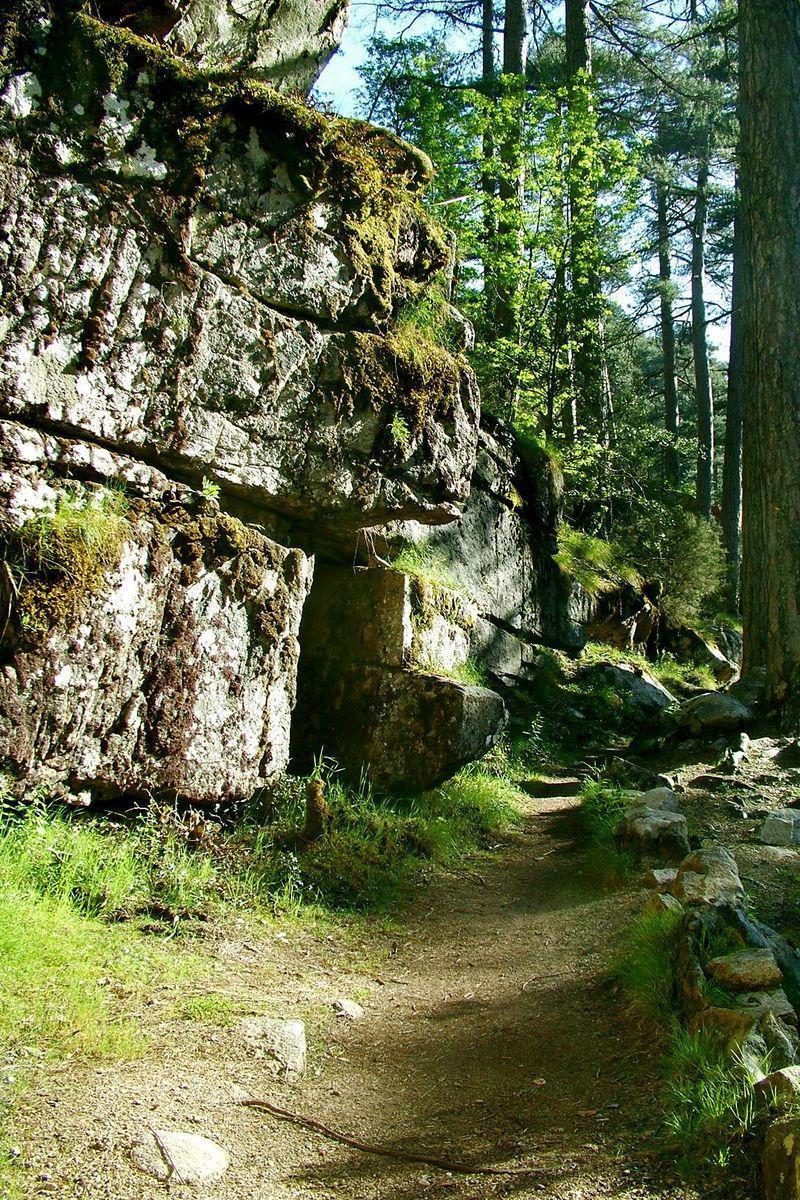 Forêt D AITONE_Évisa