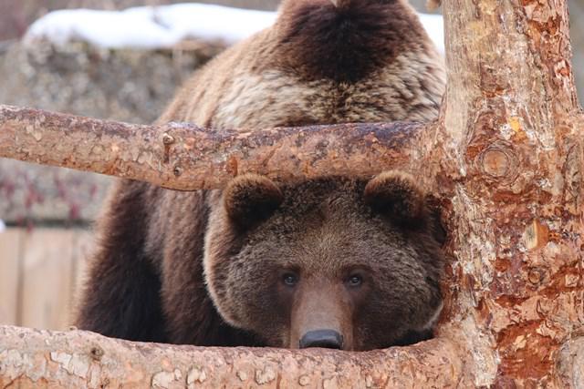 Maison de l'ours 2018 web