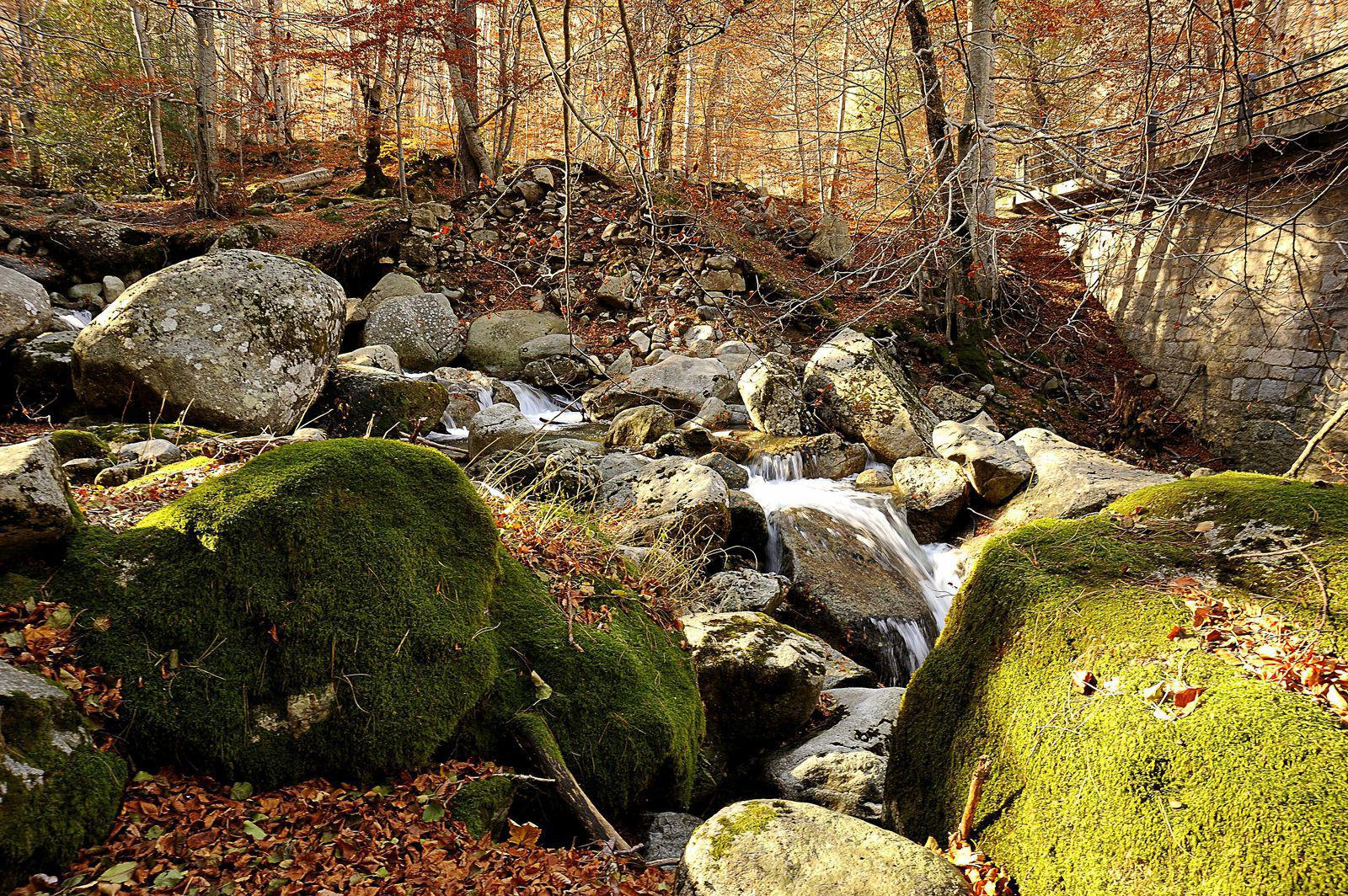 Forêt_Vizzavona
