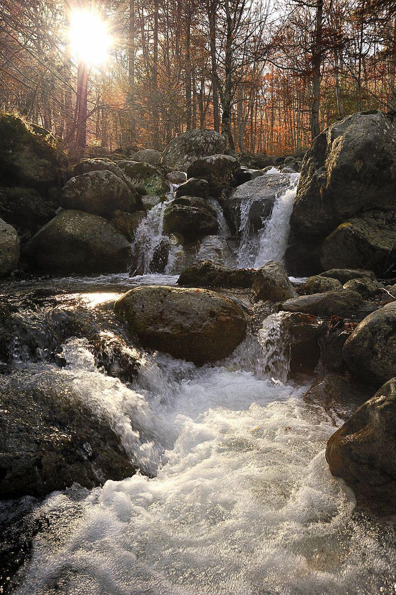 Forêt_Vizzavona (1)
