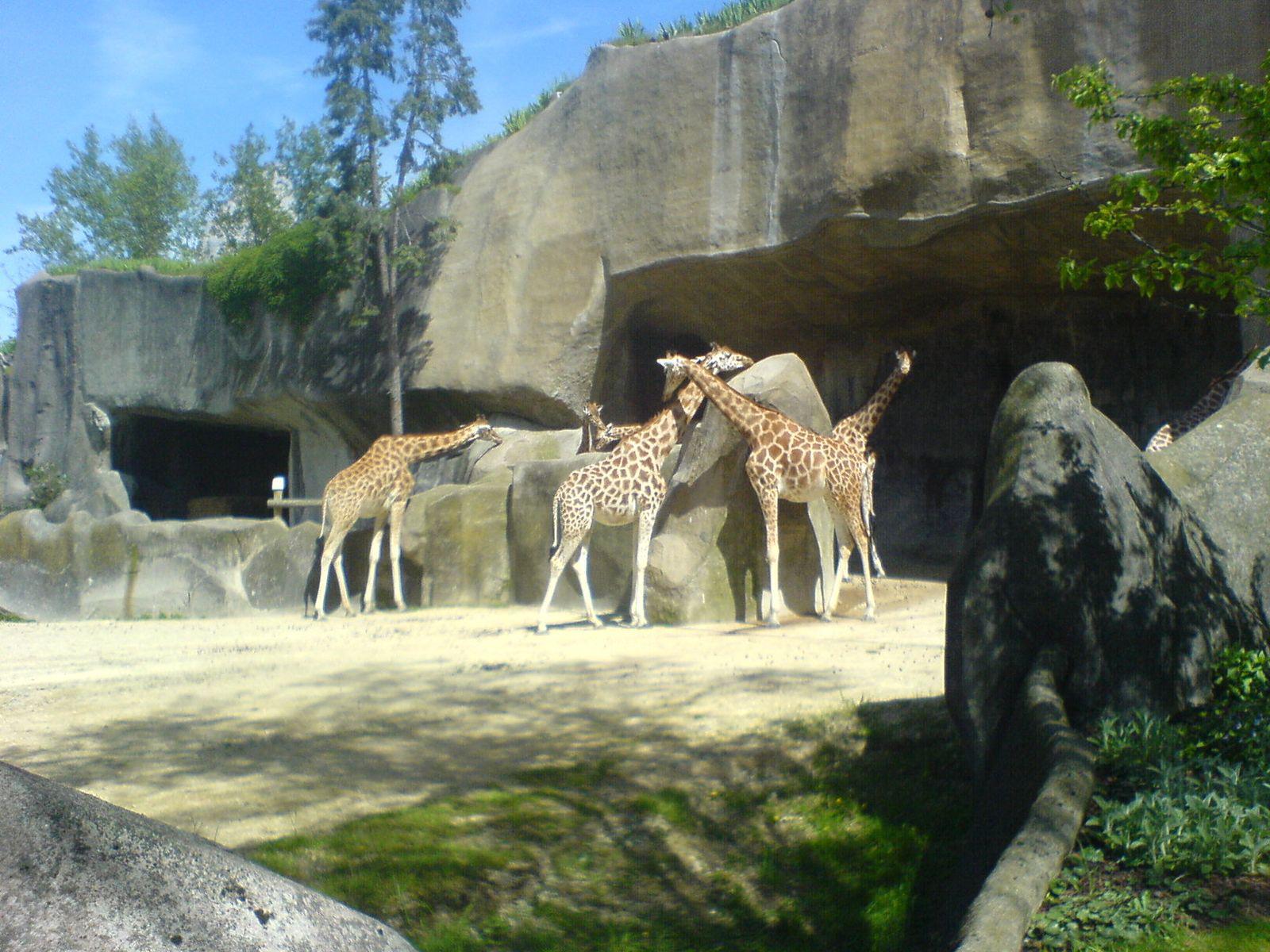 Parc Zoologique de Paris_Paris