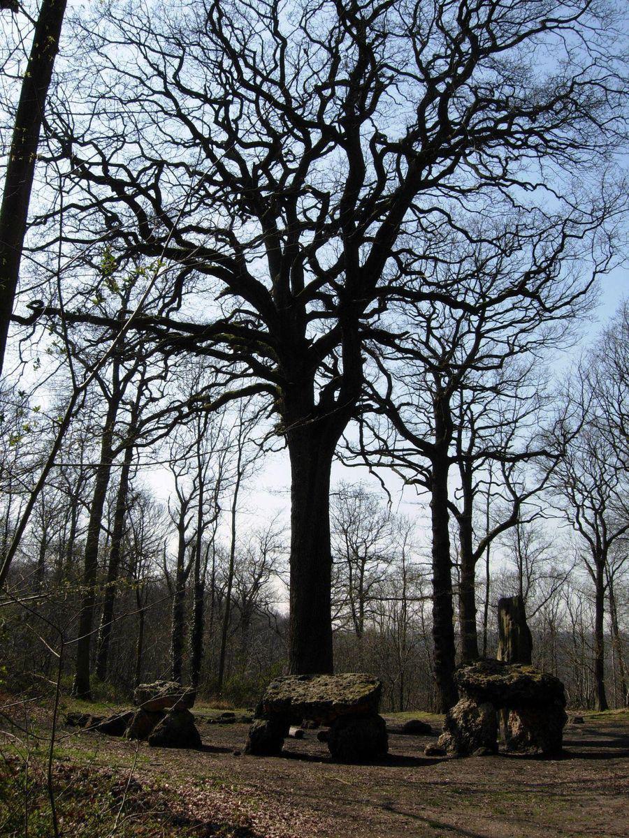 Forêt de Meudon_Meudon