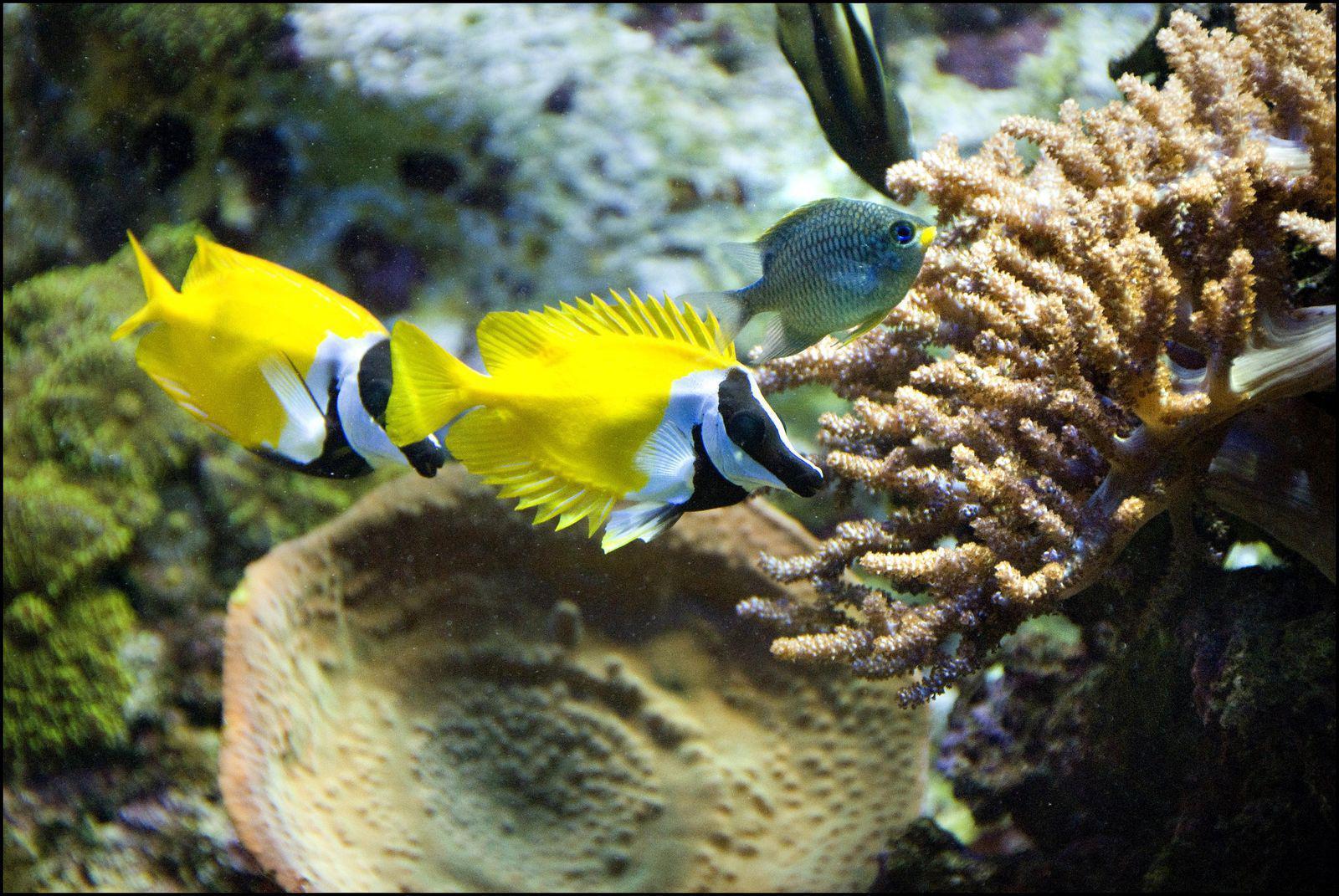 Aquarium océanographique et tropical_Vannes
