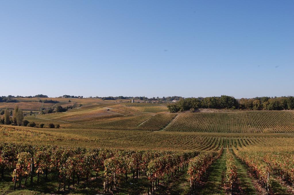 Vignoble_Bordeaux