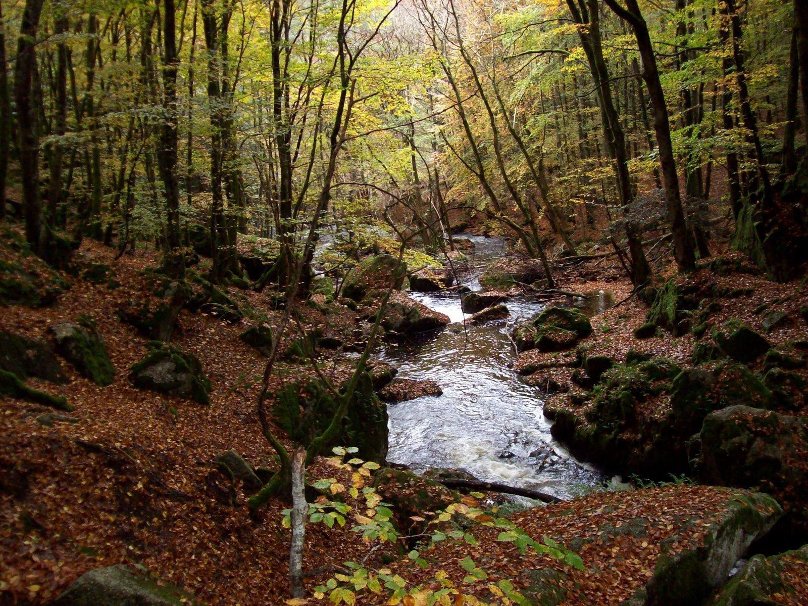Cascade de la Pisserotte_Saint-Joseph-de-Rivière