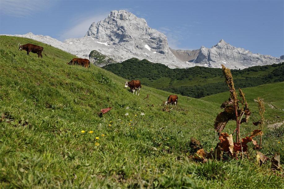 Col des Annes et ses alpages_Le Grand-Bornand