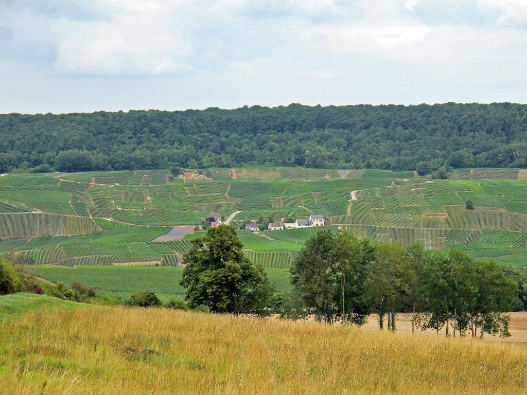 Coteaux Sud d'Epernay_Épernay