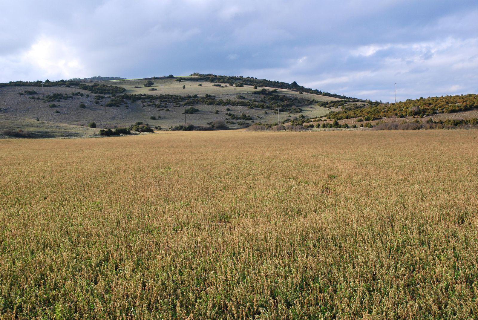 Les paysages karstiques_Hautecourt-Romanèche