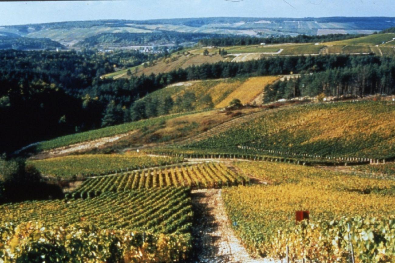 Tour des Vignes