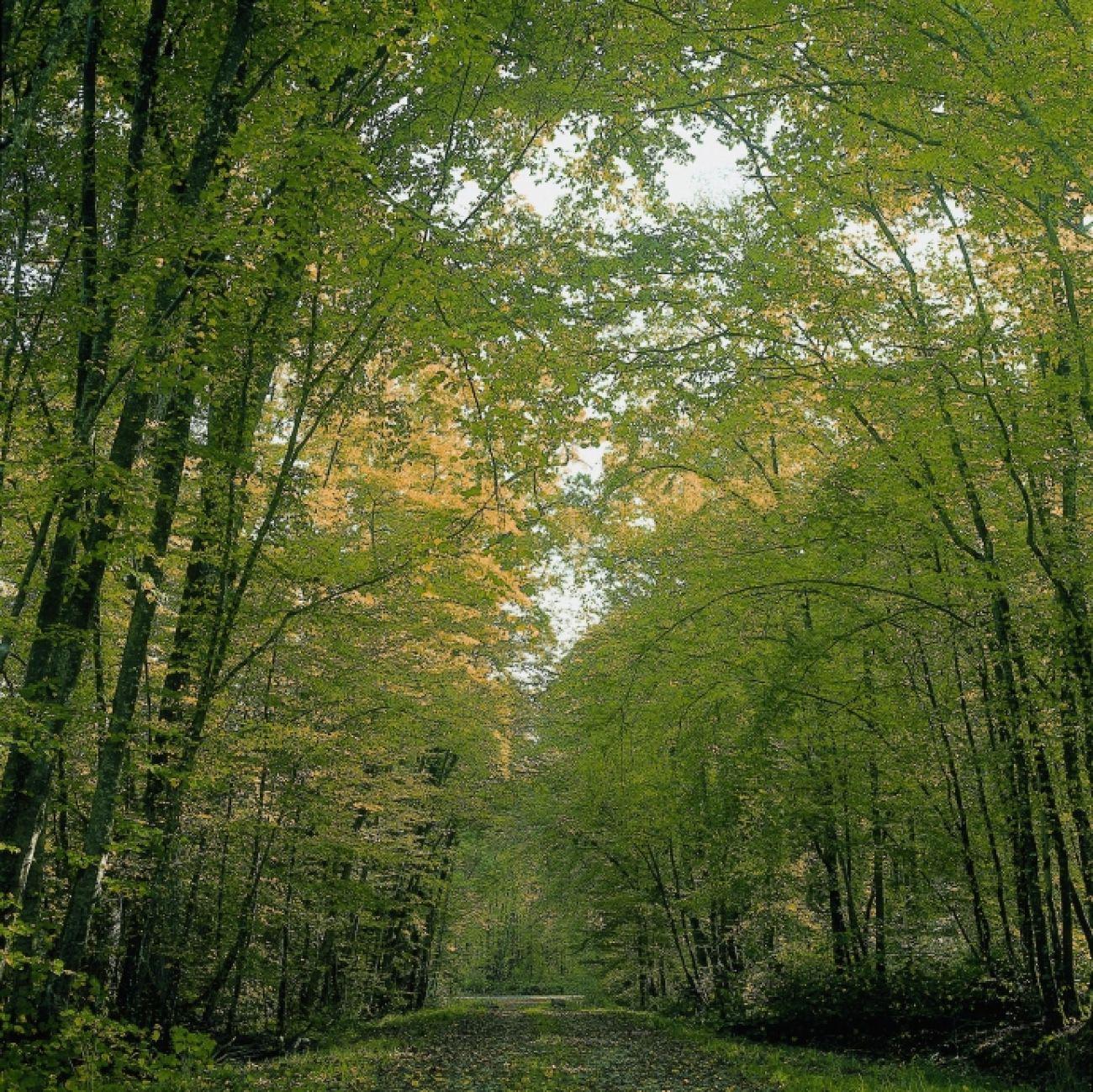La Forêt du Grand-Orient