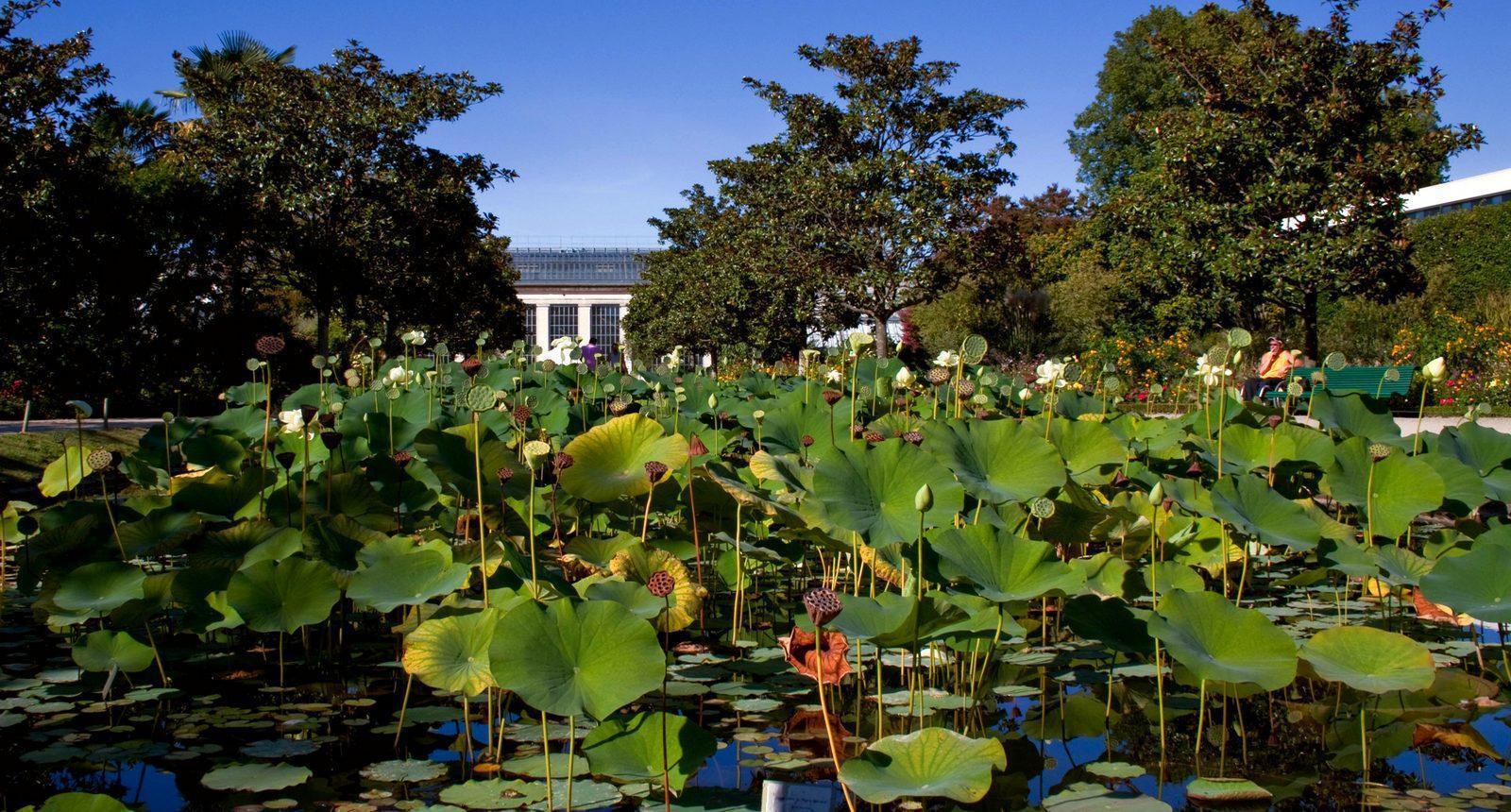 Visite de la ville de tours s jour week end tourisme for Jardin botanique tours