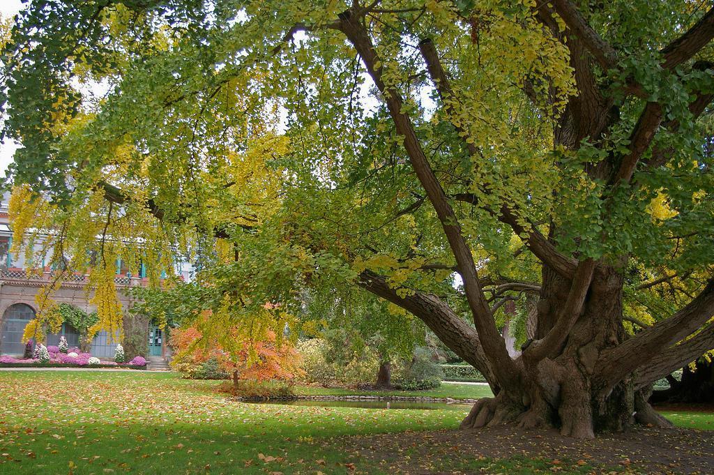 Parcs jardins botaniques arboretums indre et loire 37 for Jardin botanique tours