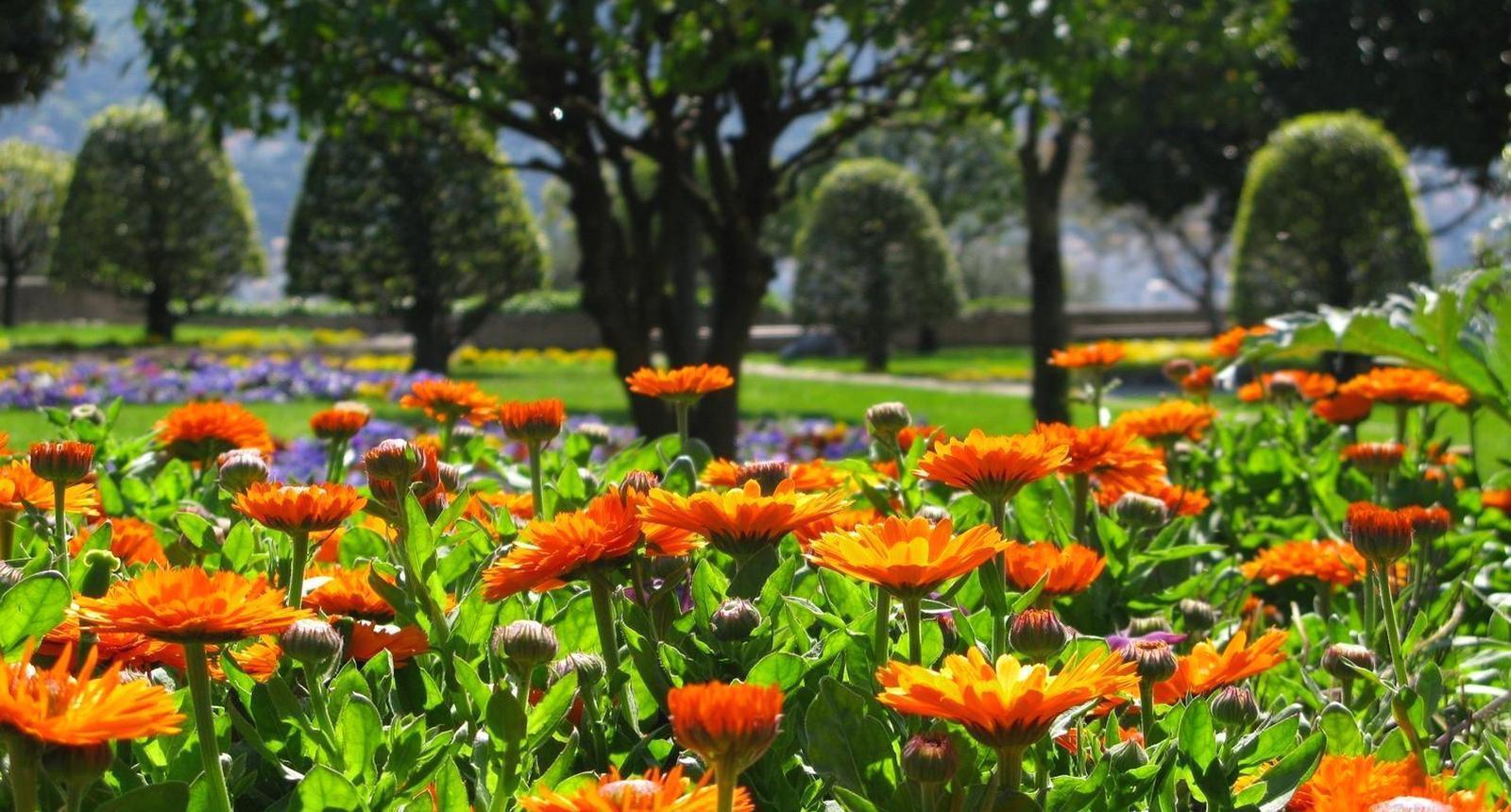 Nice, les jardins du Monastère de Cimiez