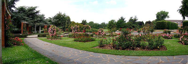 jardin plantes : roseraie