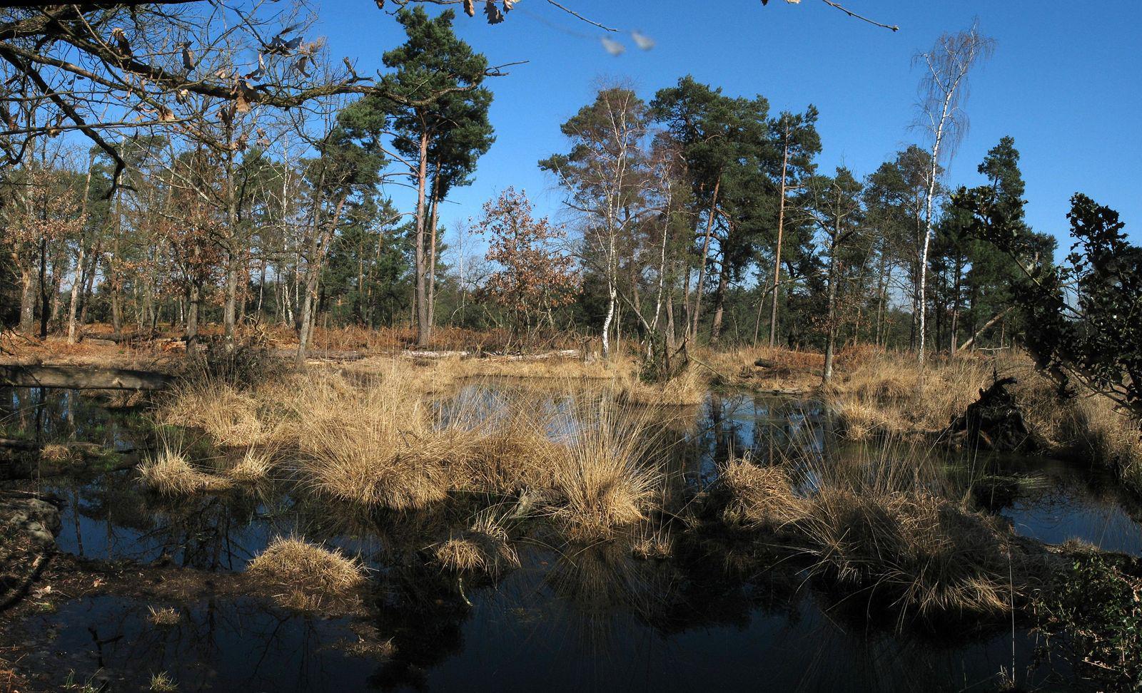 Forêt de Fontainebleau_Fontainebleau