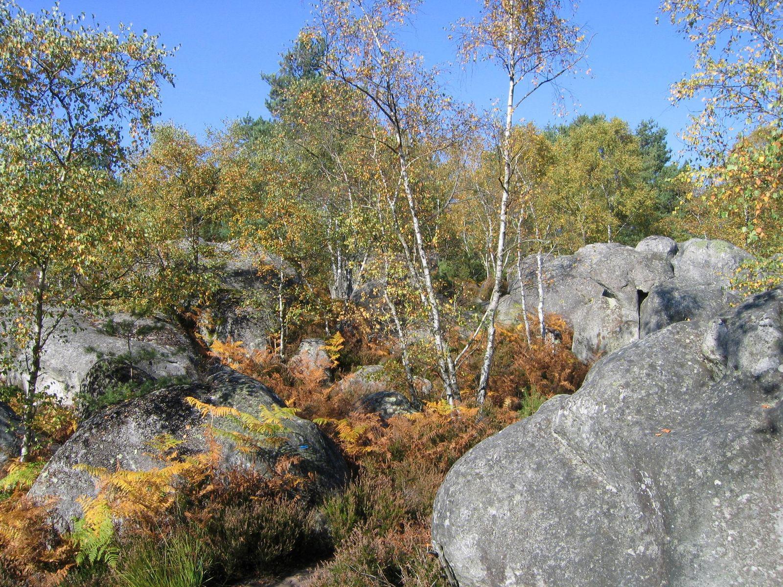Forêt de Fontainebleau_Fontainebleau (1)