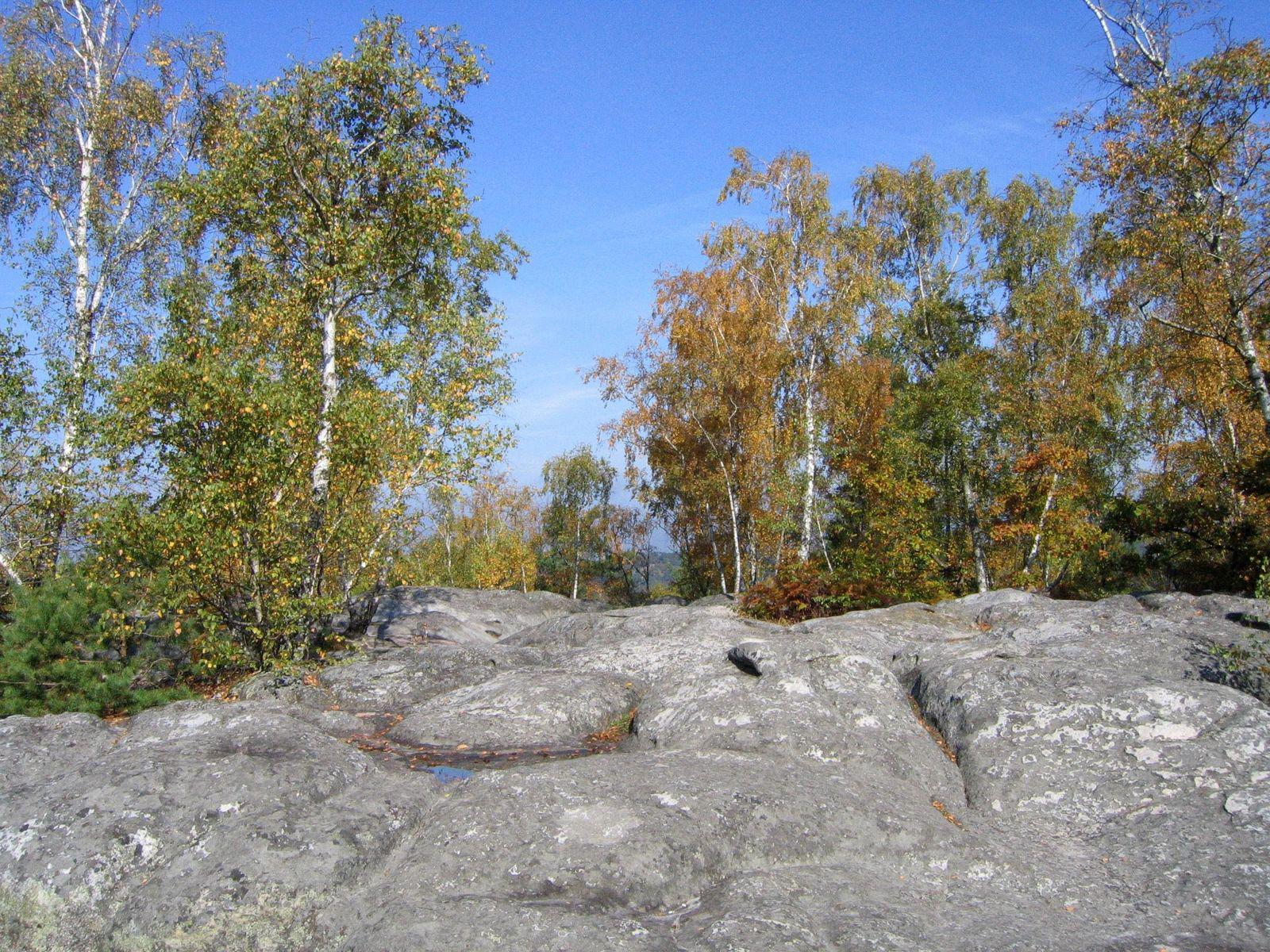 Forêt de Fontainebleau_Fontainebleau (2)