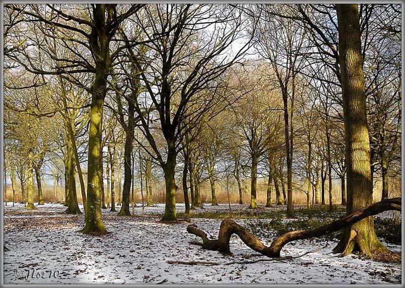Forêt de Guînes - Colonne Blanchard_Guînes