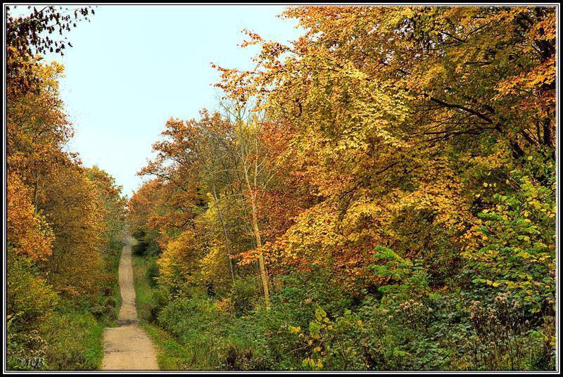 Forêt de Guînes - Colonne Blanchard_Guînes (1)