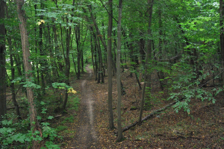 Forêt de Jouy_Jouy-le-Châtel