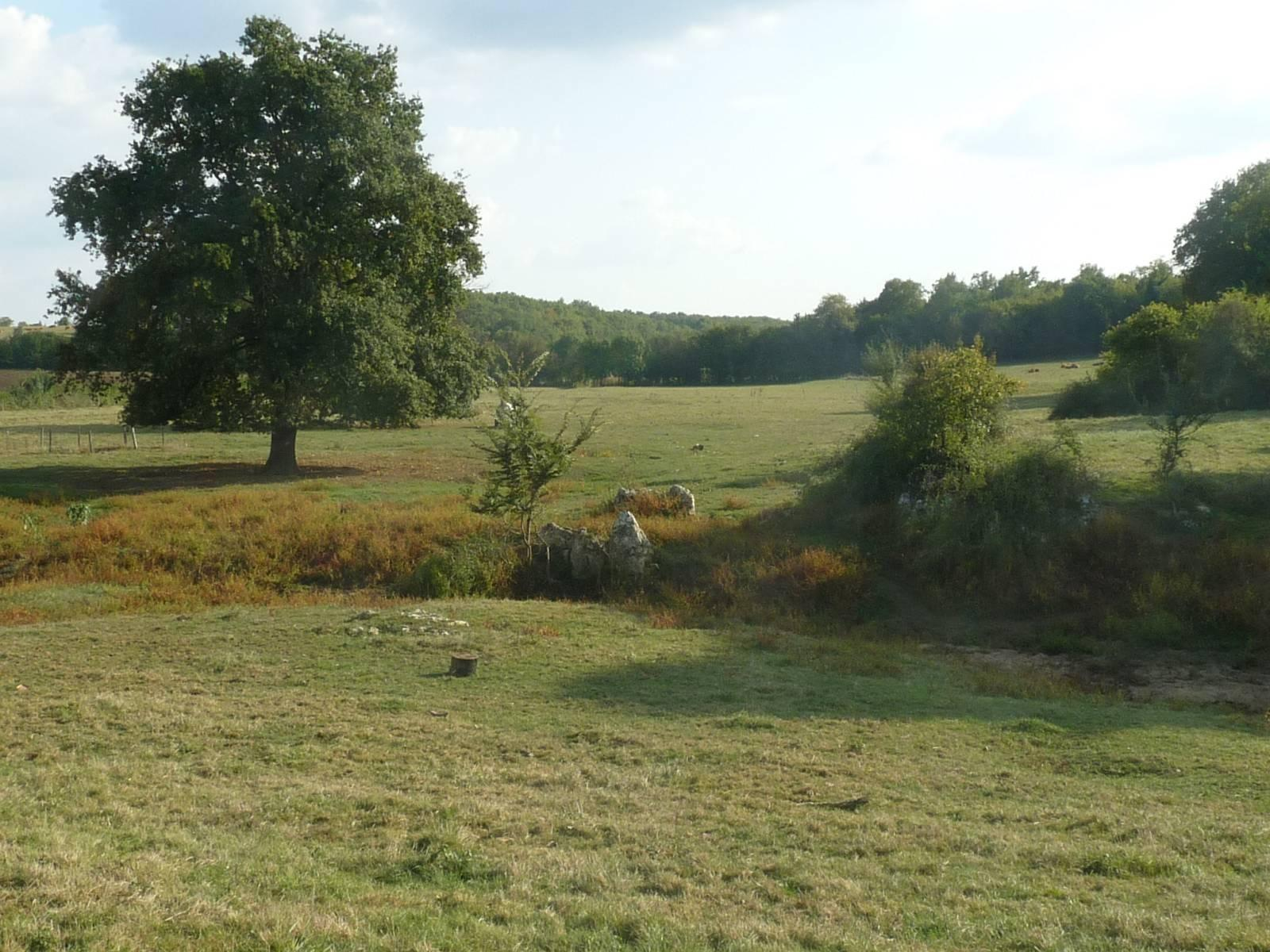 Forêt de la Braconne_Mornac