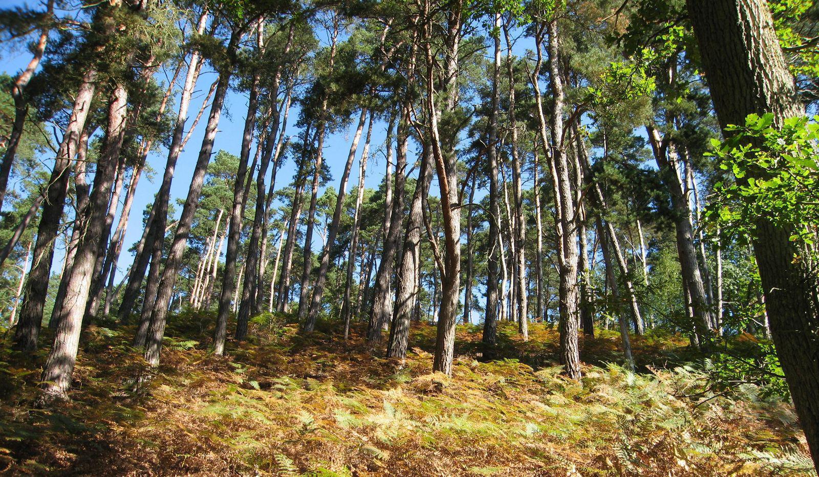 Forêt de Rambouillet_Rambouillet (1)