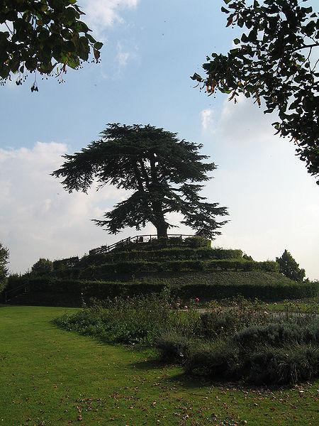 Parc Michel d'Ornano : Cèdre du Liban planté en 1849