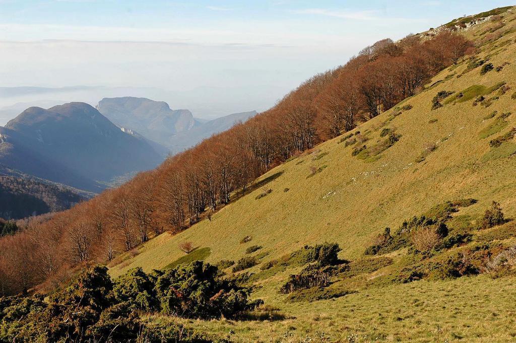 Forêt de Saoû_Saou (1)
