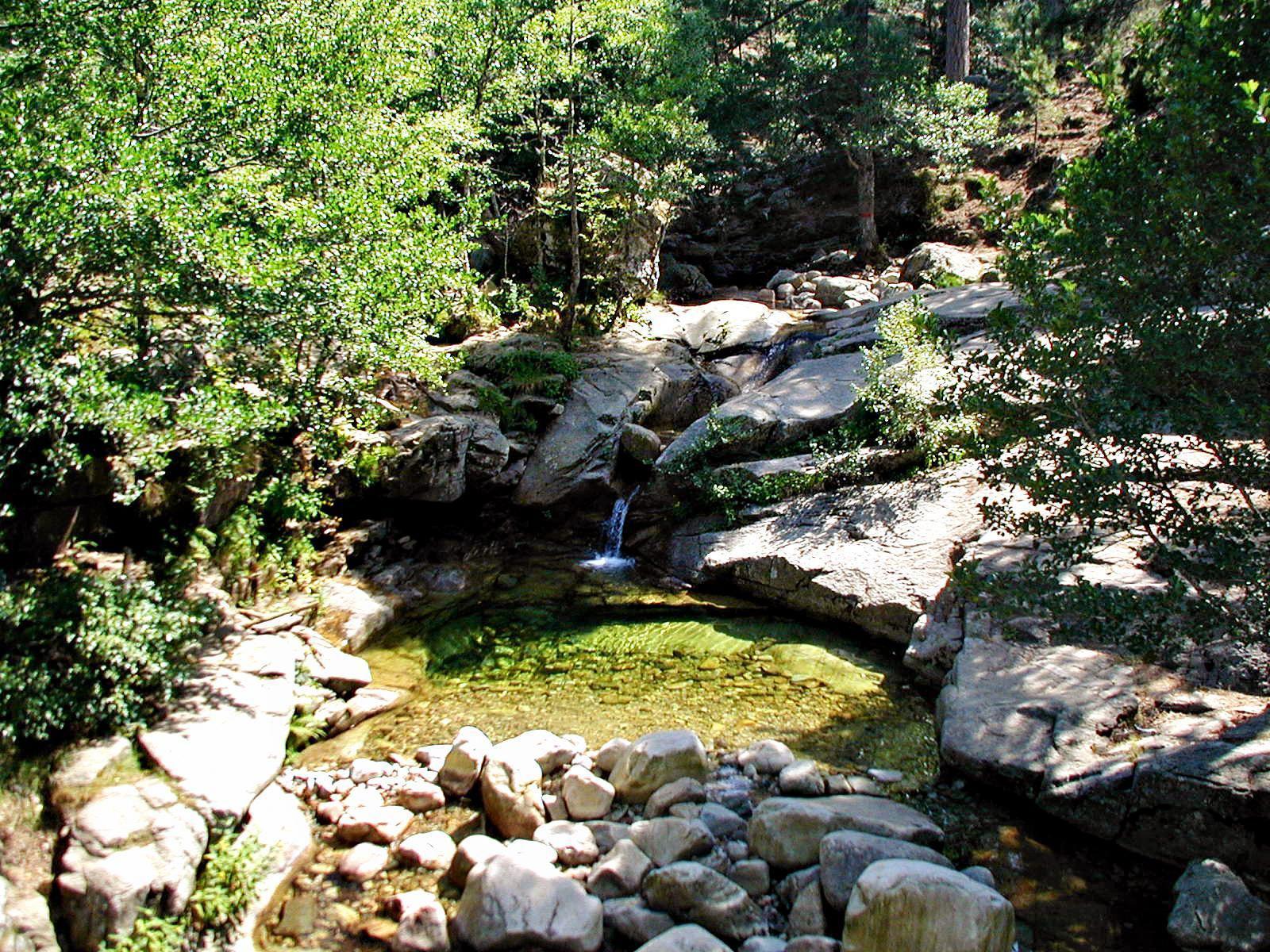 Forêt de Valdu-Niellu_Calacuccia (2)