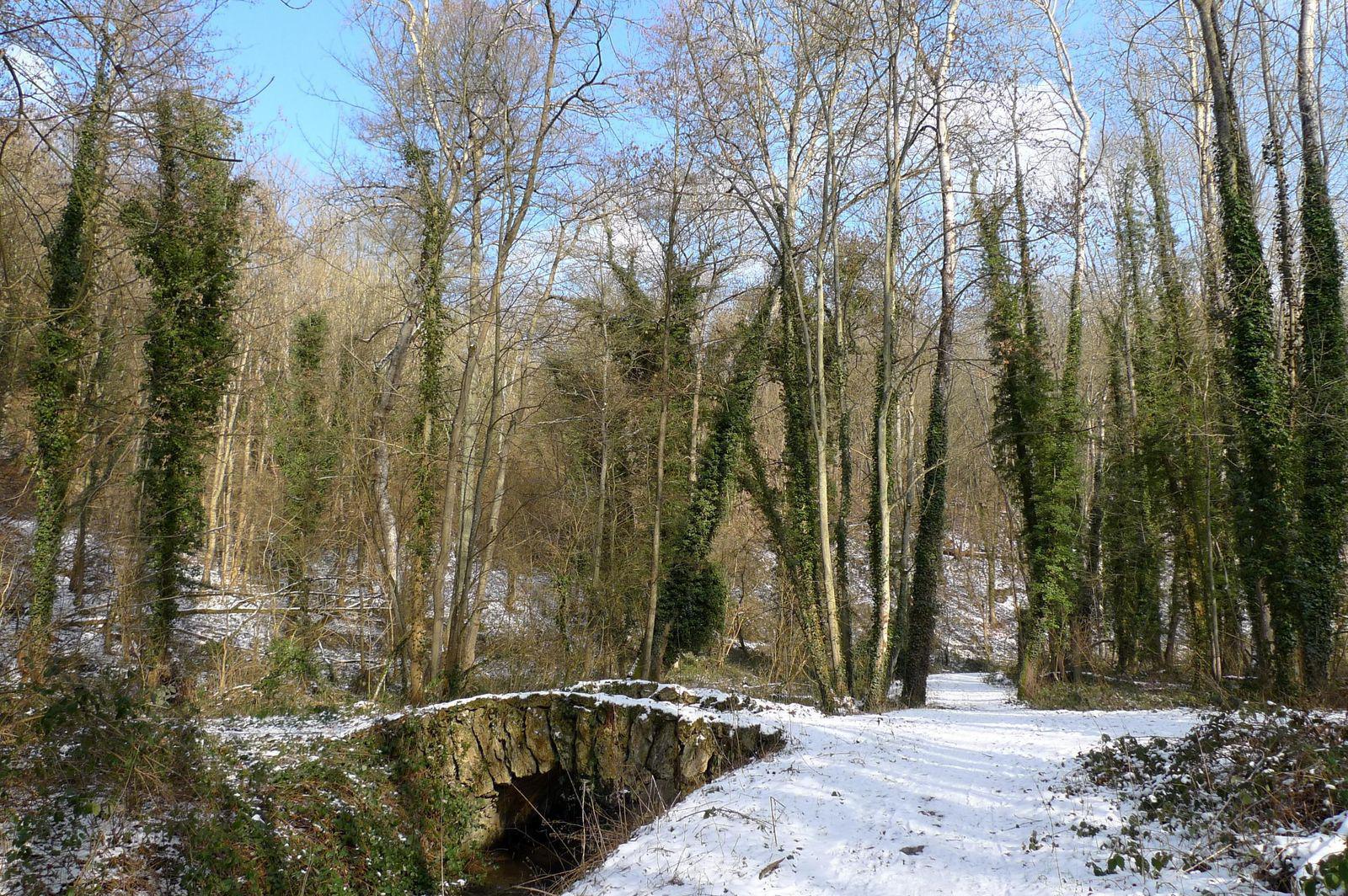 Forêt de Vallée de la Mérantaise_Rambouillet (1)