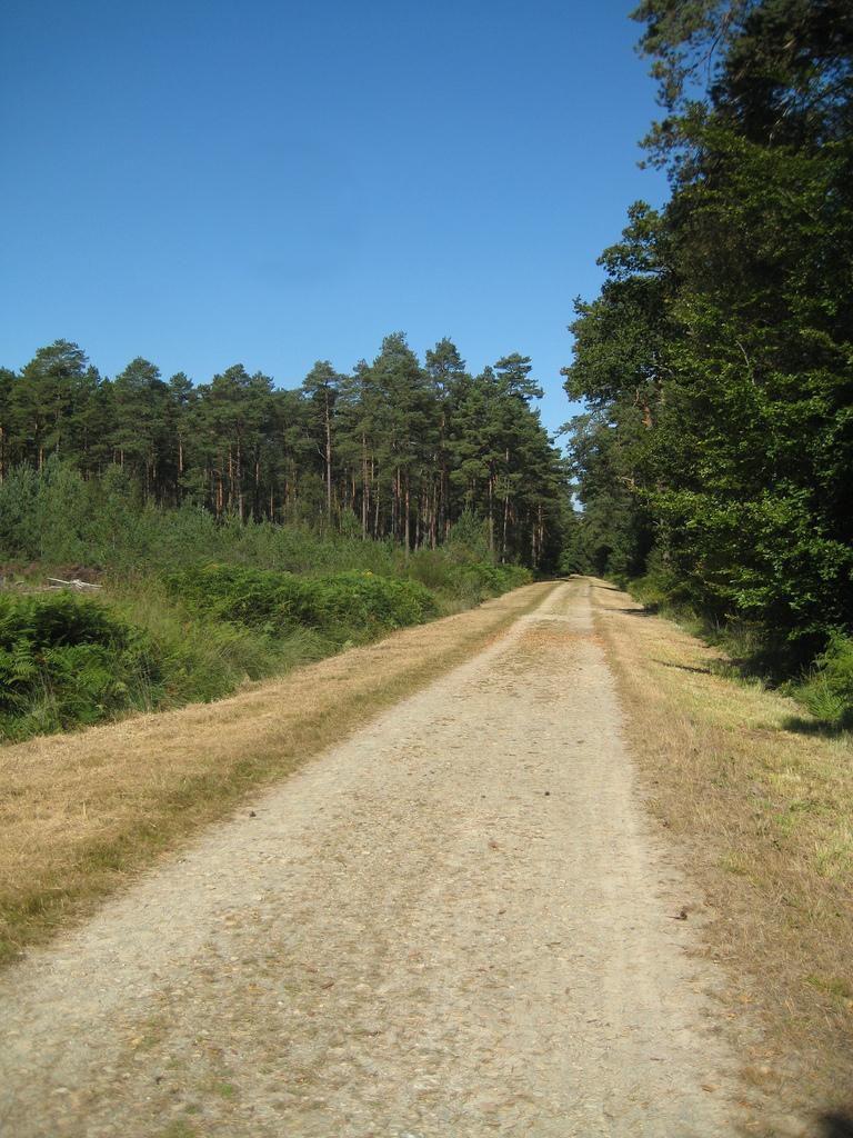 Image : Forêt domaniale de Rennes