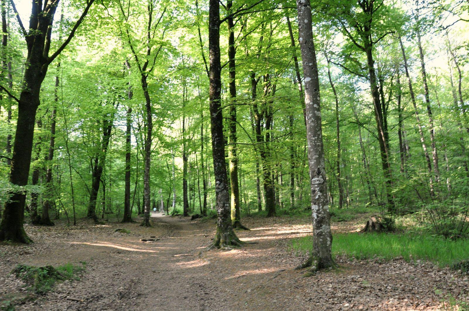 Image : Forêt domaniale du Mesnil