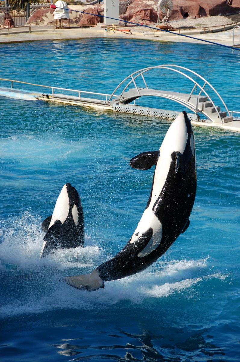 Marineland_Antibes