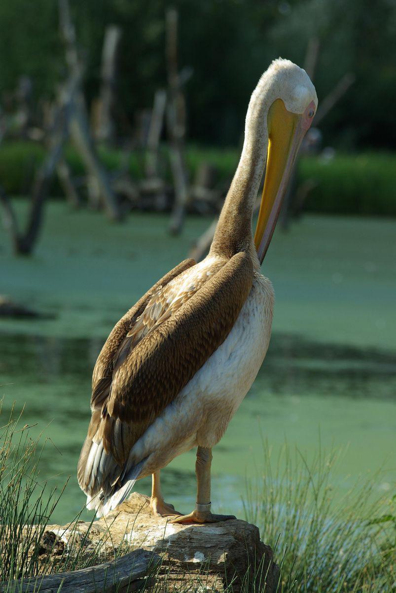 Parc animalier de Sainte-Croix_Rhodes (1)