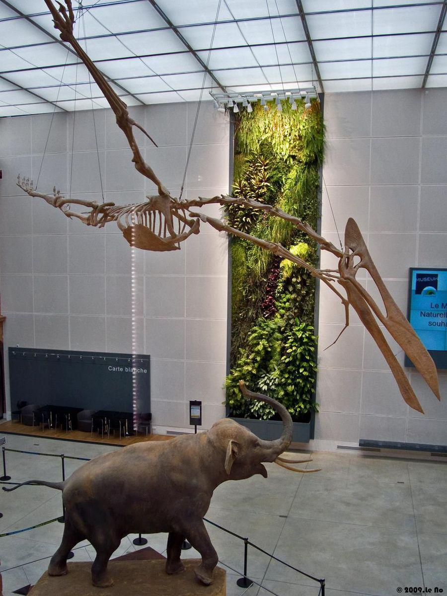 Image : Muséum d'histoire Naturelle