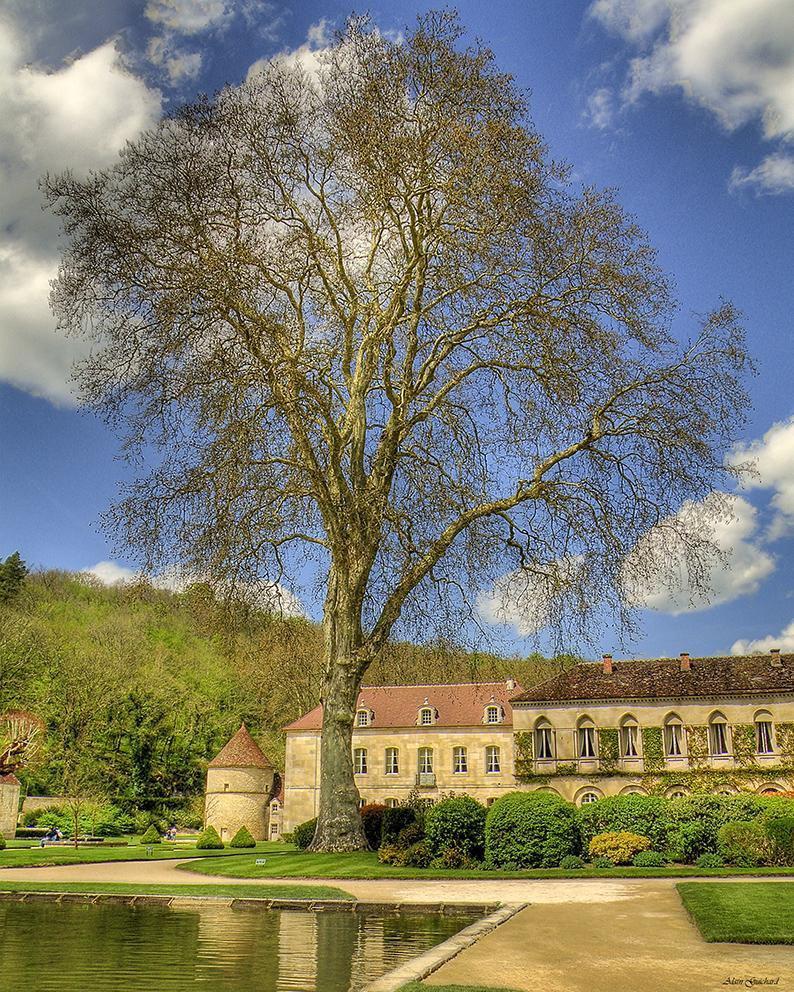 Abbaye de Fontenay_Marmagne (3)